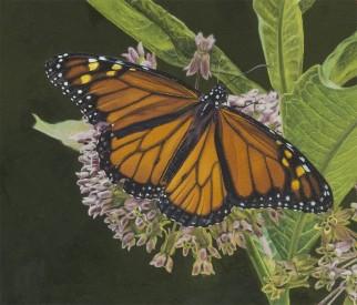 Frentnerthumbnail_monarch