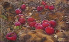FretnerPhi Apples