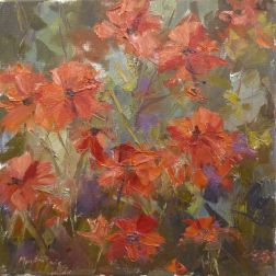 NOAPS Davis poppies